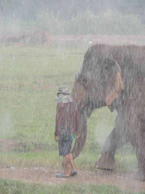 elephant mahoot thunderstorm