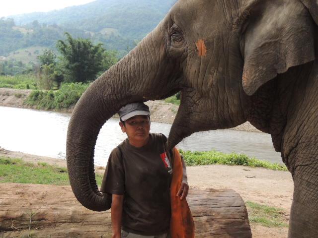 elephant mahoot