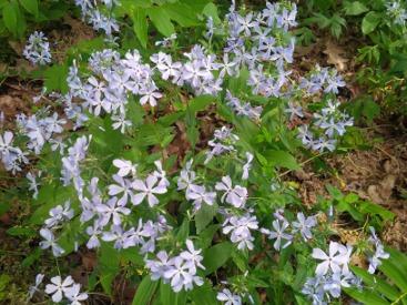 Pelee Island Flowers